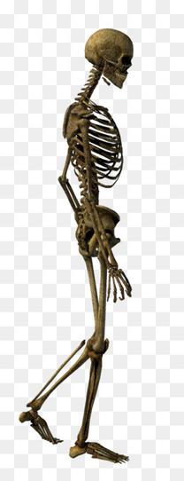行走的骨骼