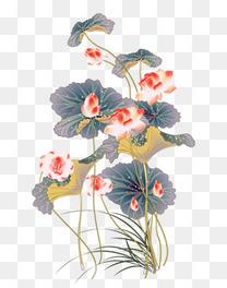 中国风淡雅盛开的荷花图片下载 荷花 中国风 水彩 莲花