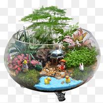 苔藓微景观组合植物生态瓶