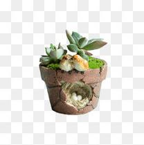 多肉植物小鸟花盆摆件