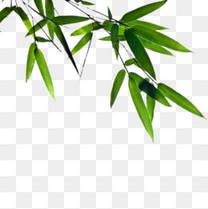绿色竹子图