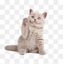 招财的猫咪