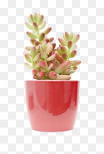 红色盆栽里的多肉植物