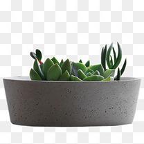 多肉绿植小盆栽花盆