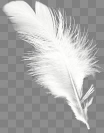 白色羽毛元素