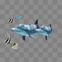 海豚 小鱼