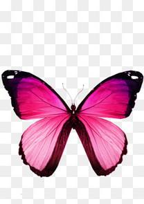 一张红色蝴蝶