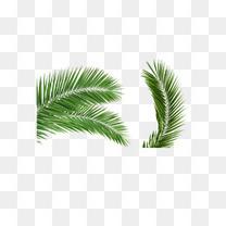 椰树免扣素材图片