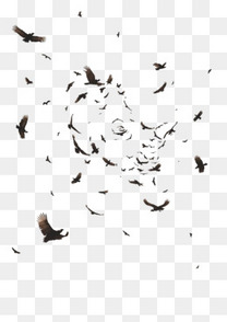 飞翔的乌鸦