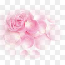 粉色梦幻玫瑰花朵花瓣