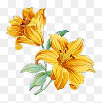金色手绘花