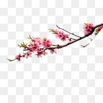 粉嫩桃花枝