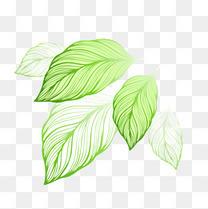 卡通手绘清新唯美树叶