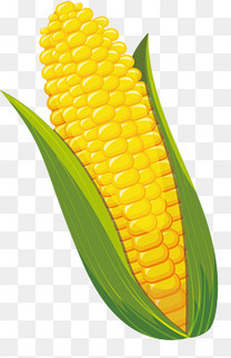 黄色卡通玉米