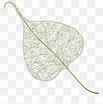 卡通手绘树叶