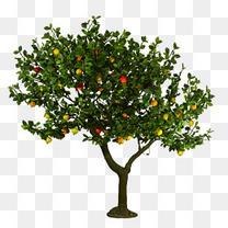 实物 果树 促销
