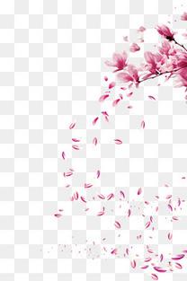 漂浮的玉兰花瓣