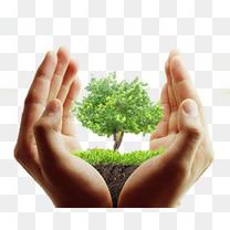 手中的环保小树免抠