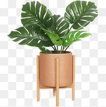 绿色的植物盆栽装饰
