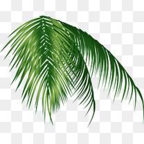 卡通夏日椰树