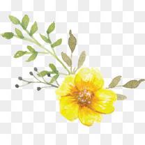 手绘水彩黄色小花