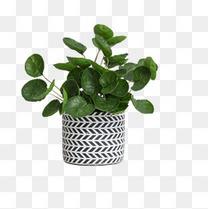 花纹图案的花盆和绿植
