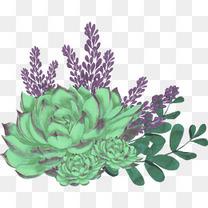 绿植和多肉花朵手绘图