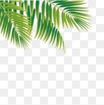 绿色热带植物卡通插画