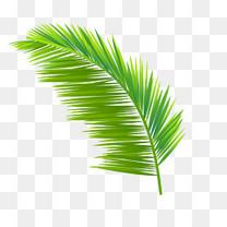 手绘绿色植物椰树叶子免抠图
