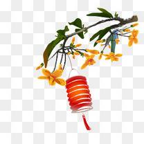 黄绿色桂花枝上的红色灯笼