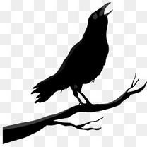 万圣节黑色的乌鸦