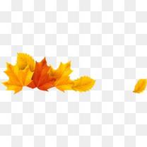 秋天枫叶树叶
