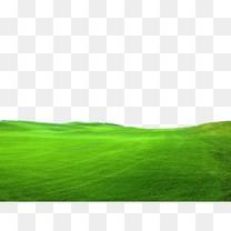 草地 草原
