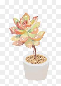 小清新多肉植物手绘彩色绿色植物盆栽png