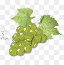 卡通矢量美味手绘水彩葡萄