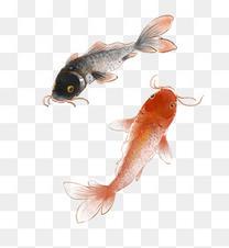 古风水墨锦鲤鲤鱼
