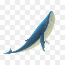 海洋公园海底世界鲸鱼蓝鲸动物手绘插画风