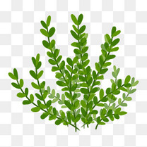 手绘插画植物树叶子