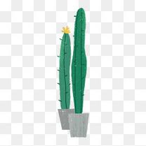手绘绿色植物仙人掌