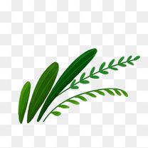 手绘美丽植物绿色草