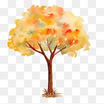 立秋秋日的红枫树