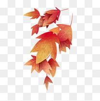 立秋手绘红枫叶图案