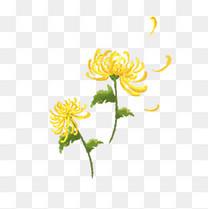 手绘重阳节水彩风菊花