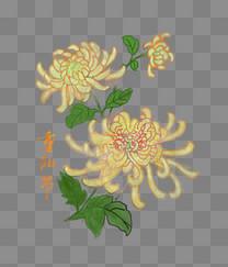 重阳节赏菊手绘png下载